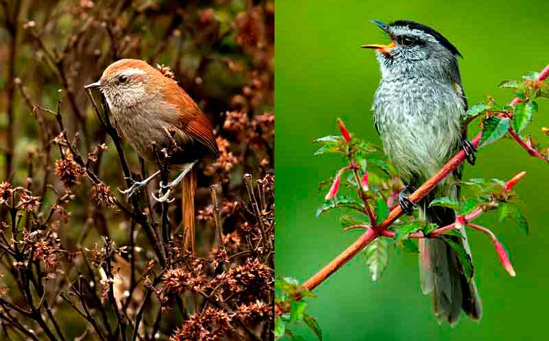 Aves en Huánuco